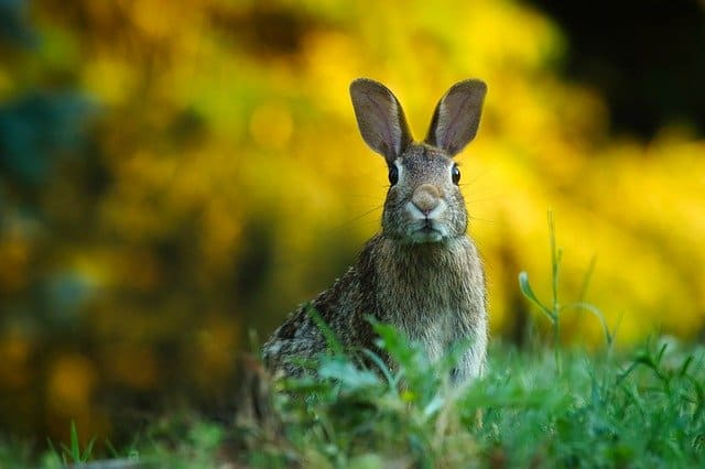 do rabbits and hares get along