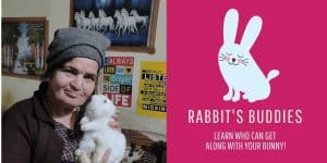 What Animals Get Along With Rabbits? A Comprehensive List!