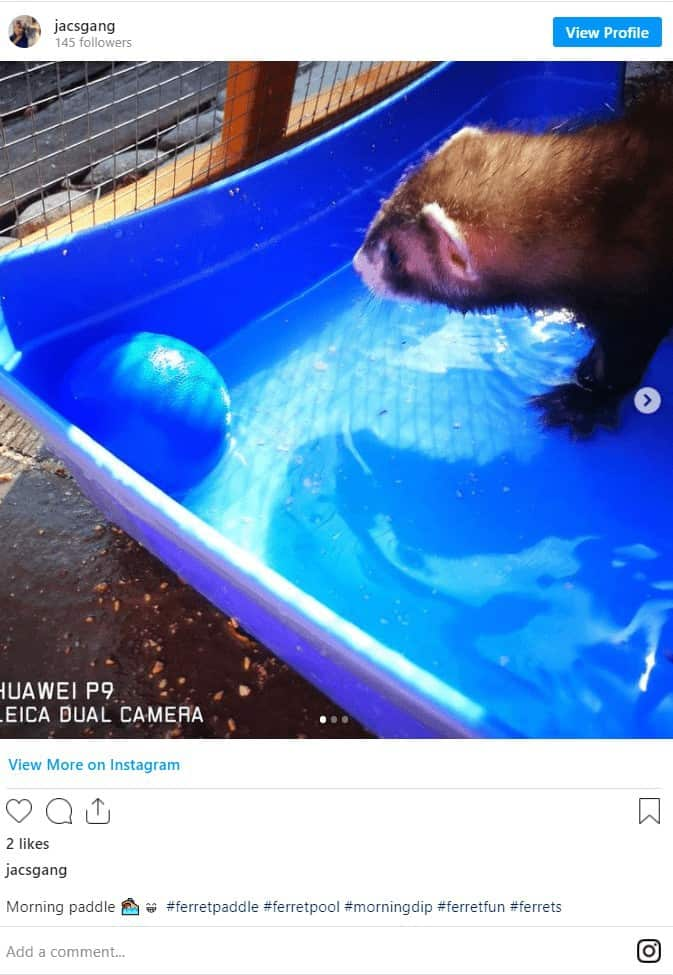 Your Essential Guide to Ferret's Water Problems 1