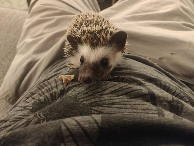The Complete HedgeHog Pooping Guide 2