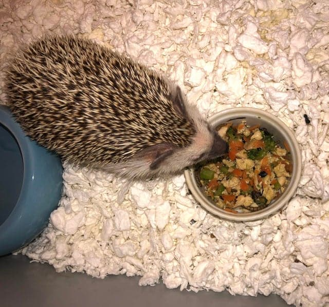 The Complete HedgeHog Pooping Guide 3