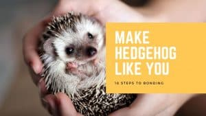 Hedgehog Doing Temper Tantrums? You Need to Read This! 1