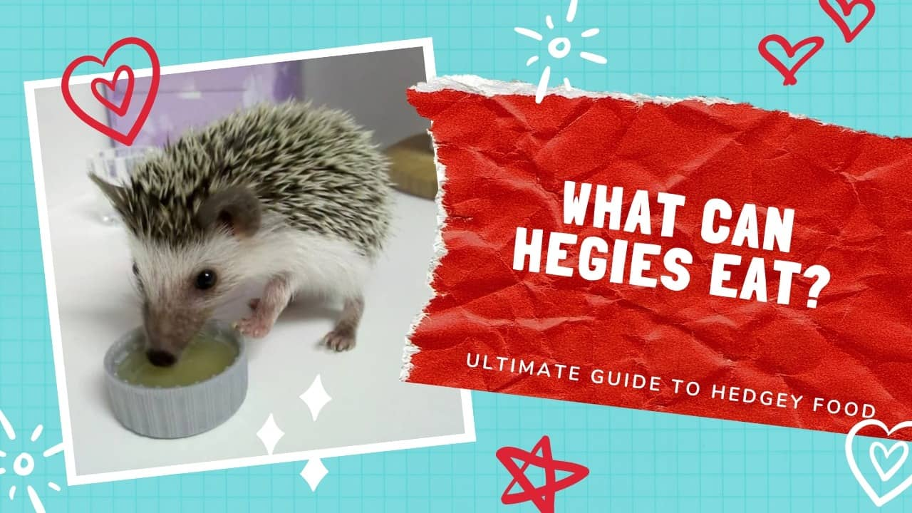 What can hedgehogs eat