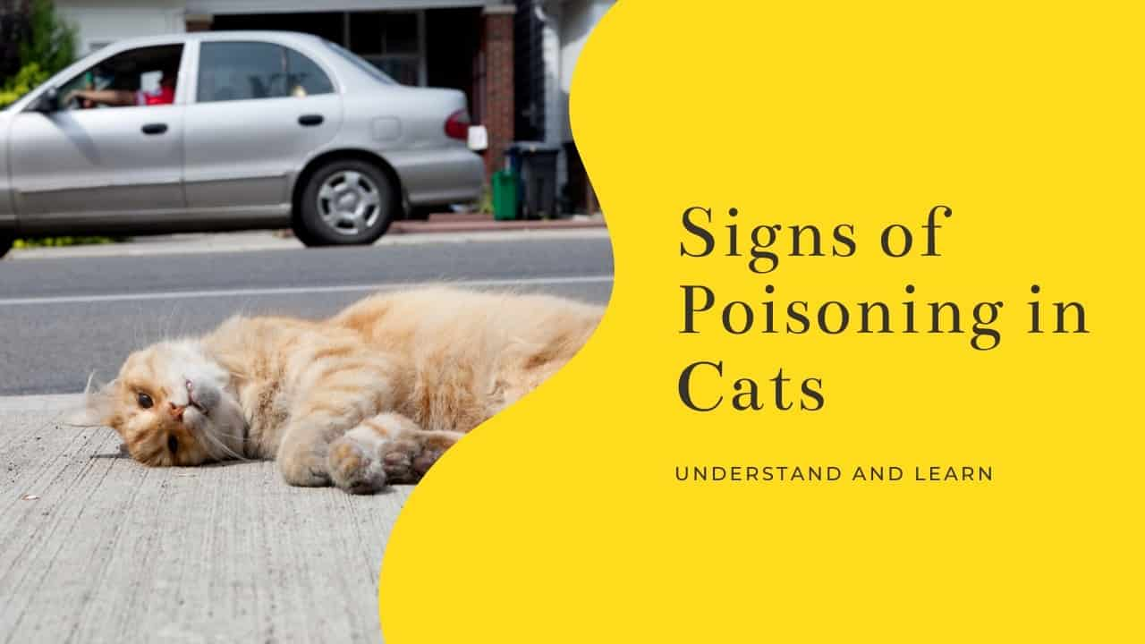 Signs of poisoning in cats