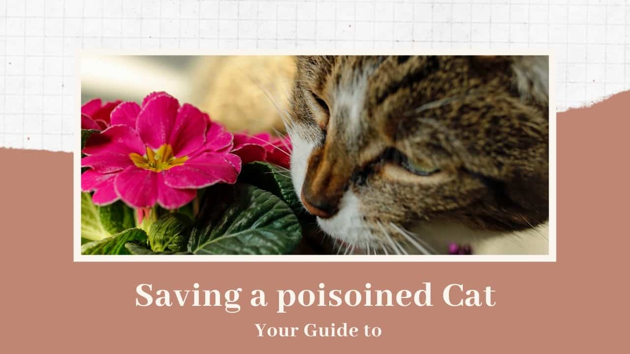 What to do if cat is poisoned
