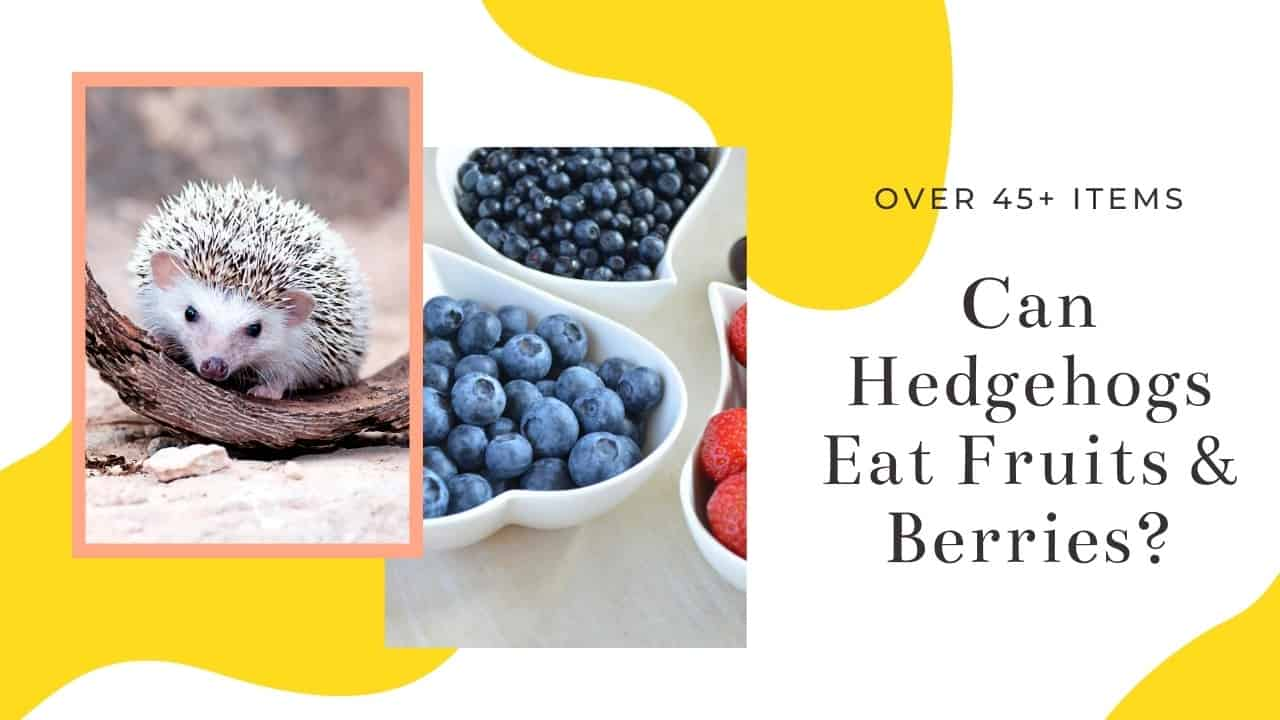 Can Hedgehogs Eat Fruits and berries