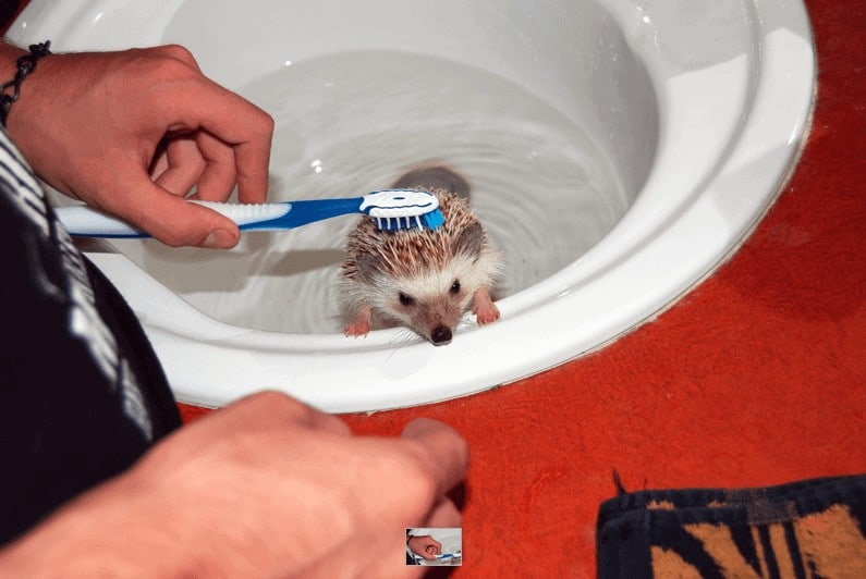 The Complete Guide to Bathing for Hedgehogs 4