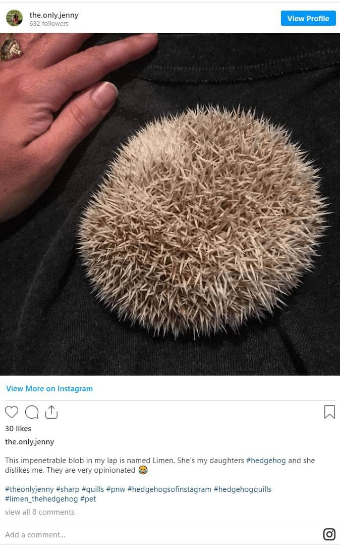 Do Hedgehogs Have Quills? All Your Quill Questions Answered! 2