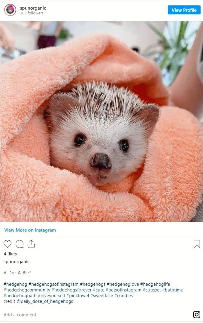 The Complete Guide to Bathing for Hedgehogs 5