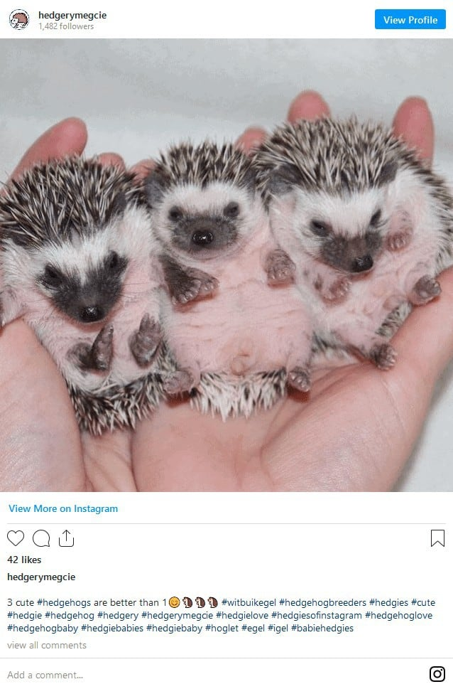 Where to Adopt a Hedgehog? Complete Guide + Hidden Costs Revealed! 10