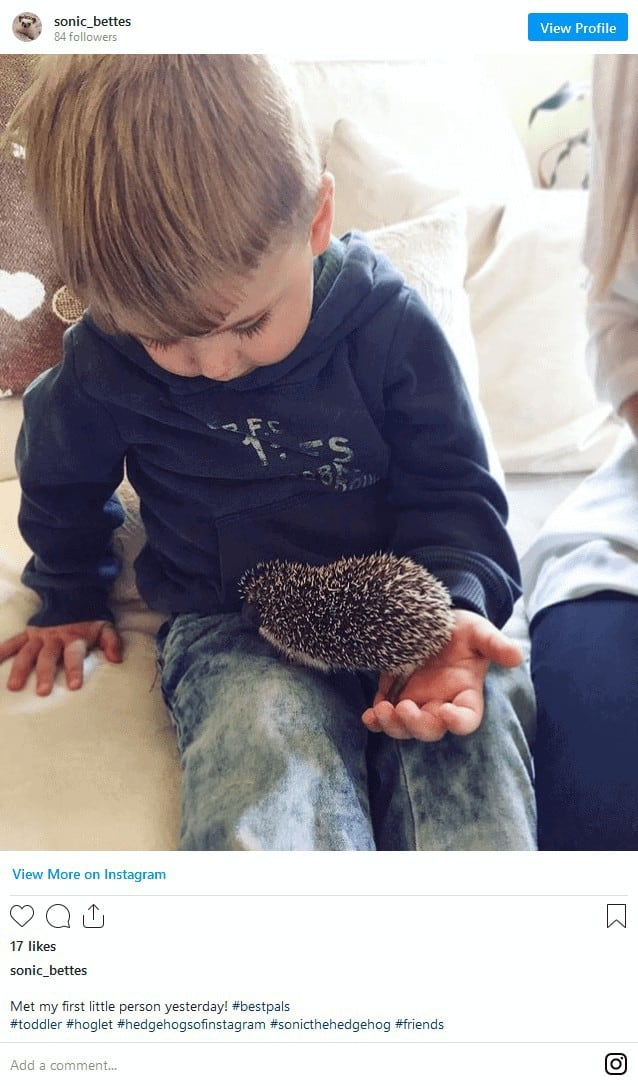 Where to Adopt a Hedgehog? Complete Guide + Hidden Costs Revealed! 12