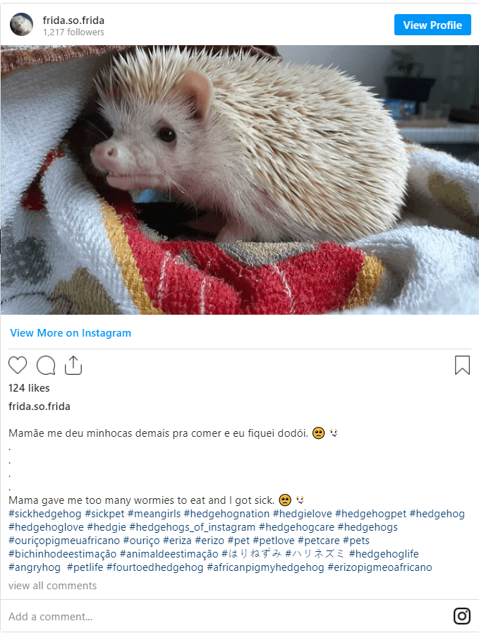 Hedgehog Dying Signs? A Guide for Troubled Times 5