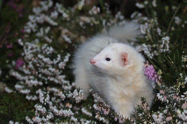 The Complete Ferret Pooping Guide 2