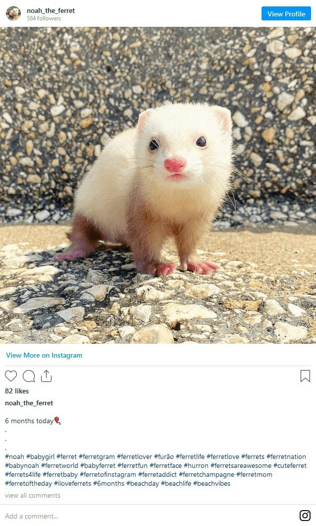 Why Do Ferrets Stink? A Guide to Dealing with Ferret Smells! 5