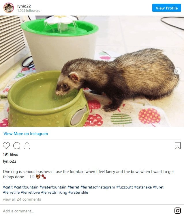 Ferret Dying Signs? A Guide to Deal with Ill and Dying Ferrets! 9
